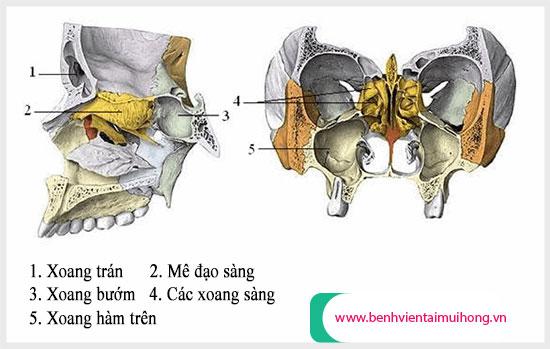 Vị trí các xoang tương ứng trên khuôn mặt khi giải phẫu